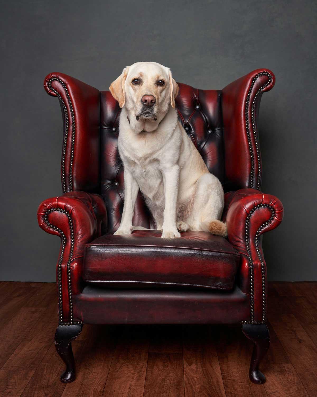 Dog Portrait Studio Photography 0003