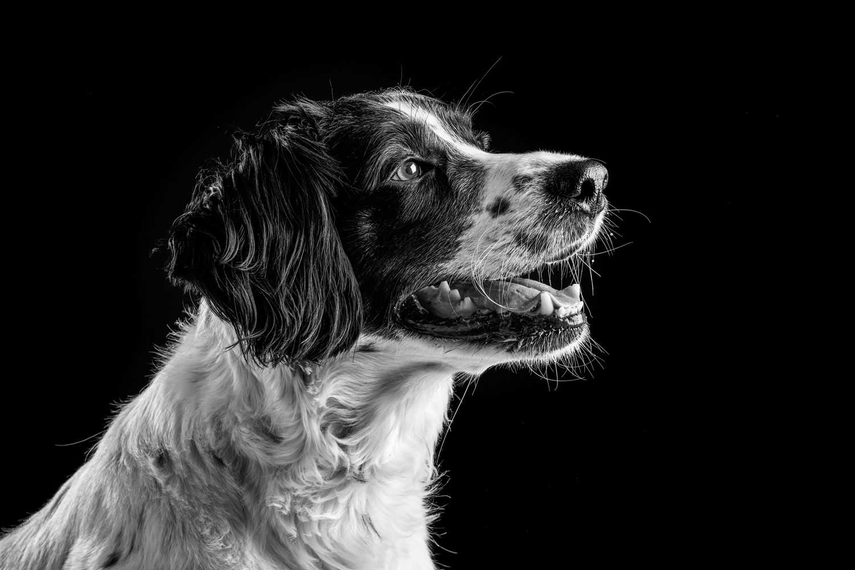 Dog Portrait Studio Photography 0004
