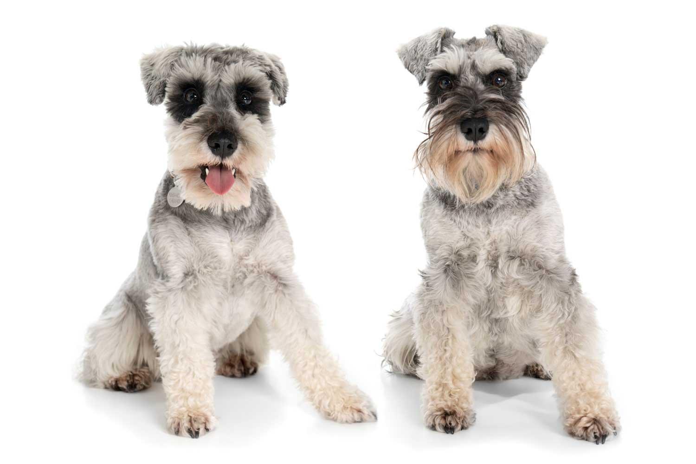 Dog Portrait Studio Photography 0008