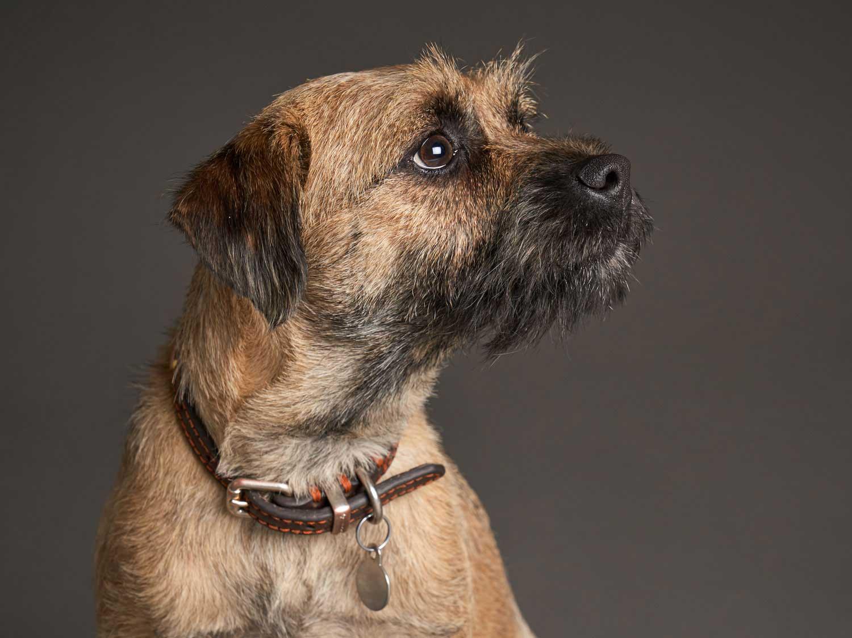 Dog Portrait Studio Photography 0009