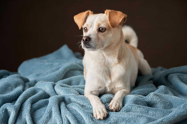 Dog Portrait Studio Photography 0010