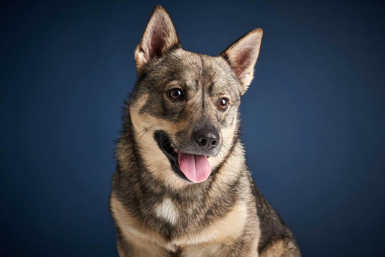 Dog Portrait Studio Photography 0013