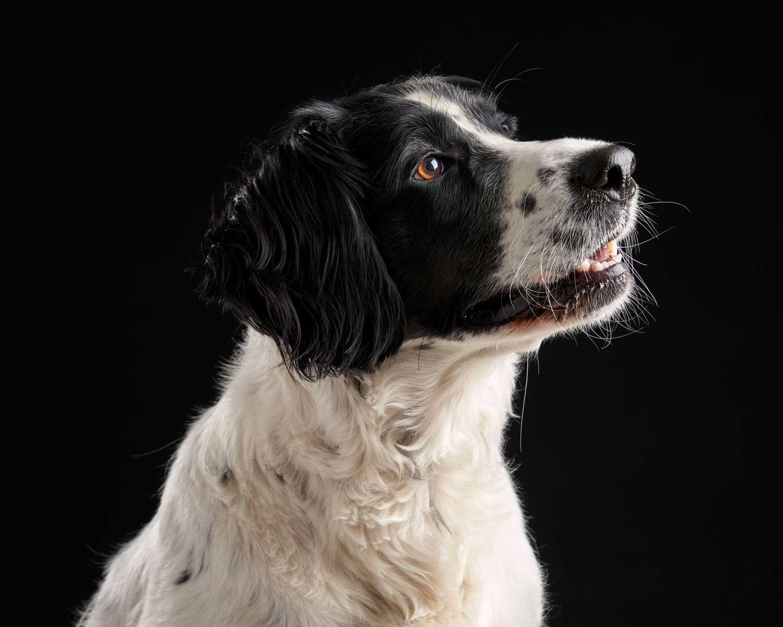 Dog Portrait Studio Photography 0014