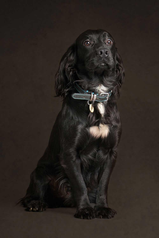 Dog Portrait Studio Photography 0018