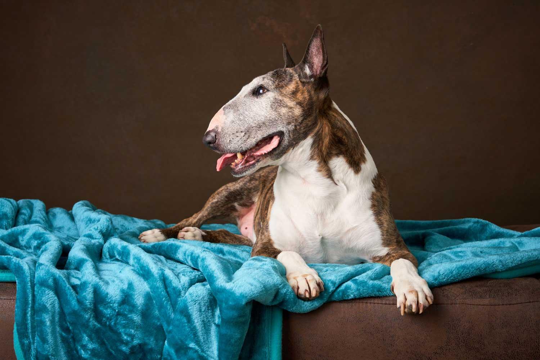 Dog Portrait Studio Photography 0019
