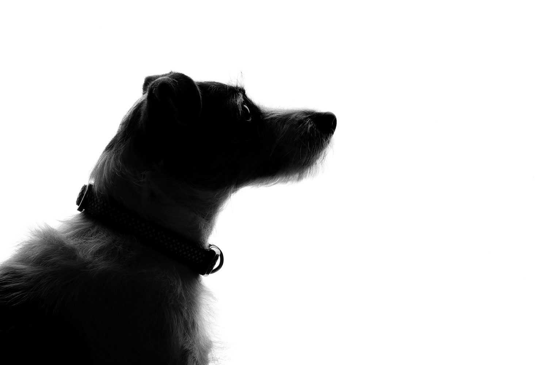 Dog Portrait Studio Photography 0025