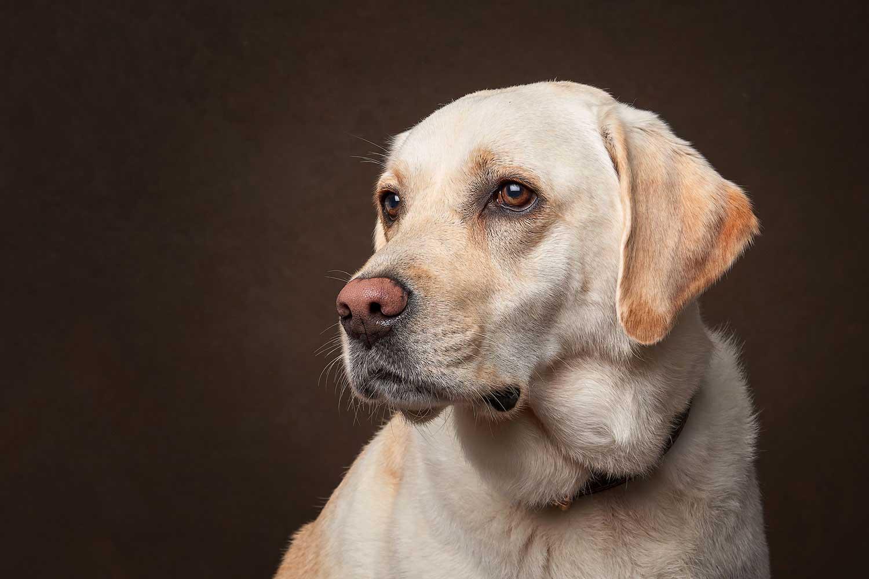 Dog Portrait Studio Photography 0026
