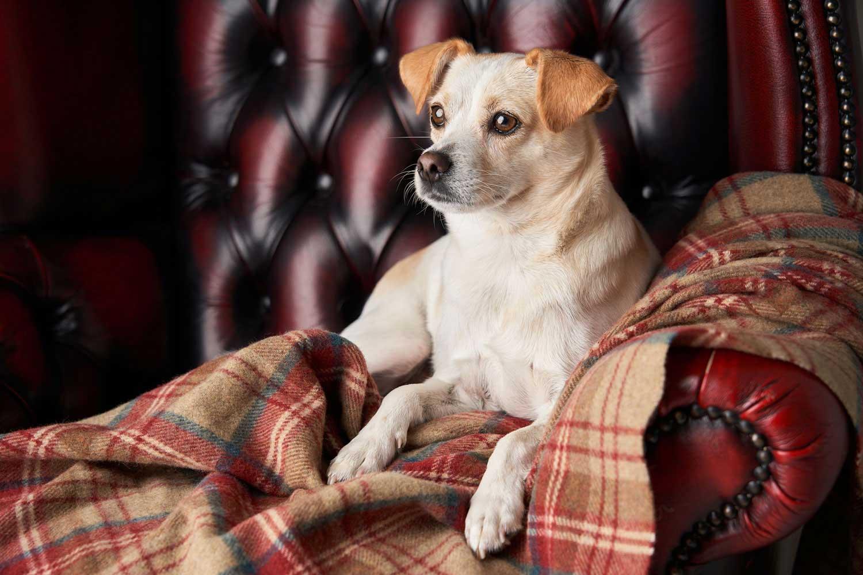 Dog Portrait Studio Photography 0027