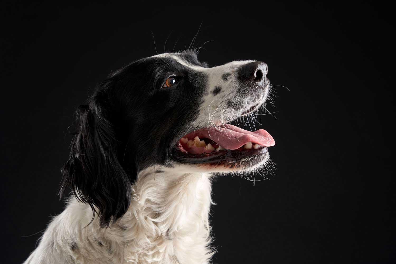 Dog Portrait Studio Photography 0036