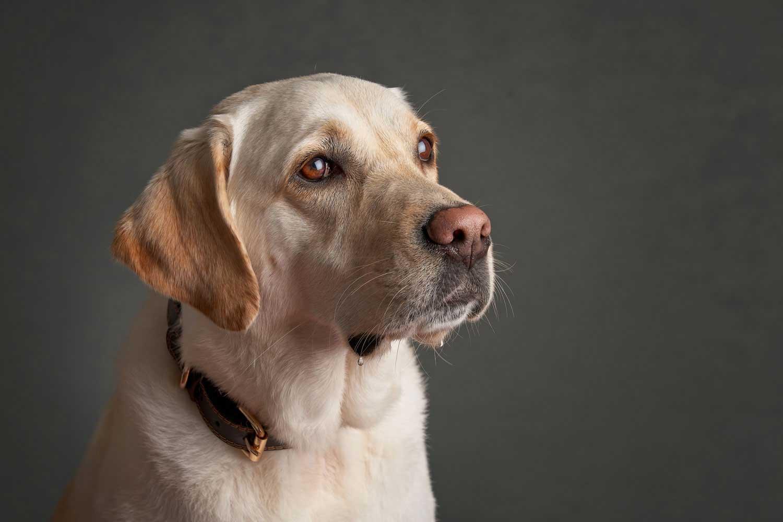 Dog Portrait Studio Photography 0038