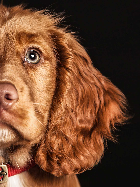 Dog Portrait Studio Photography 0041