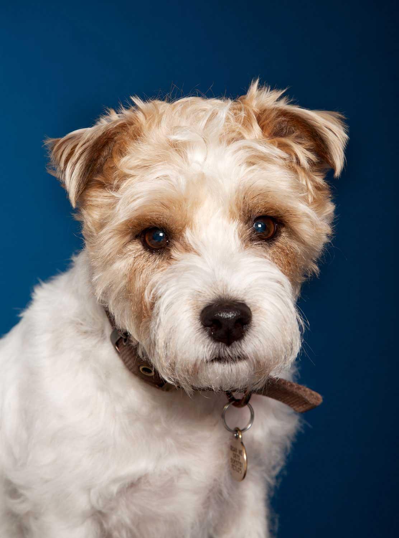 Dog Portrait Studio Photography 0043