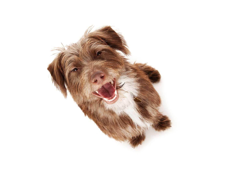 Dog Portrait Studio Photography 0045