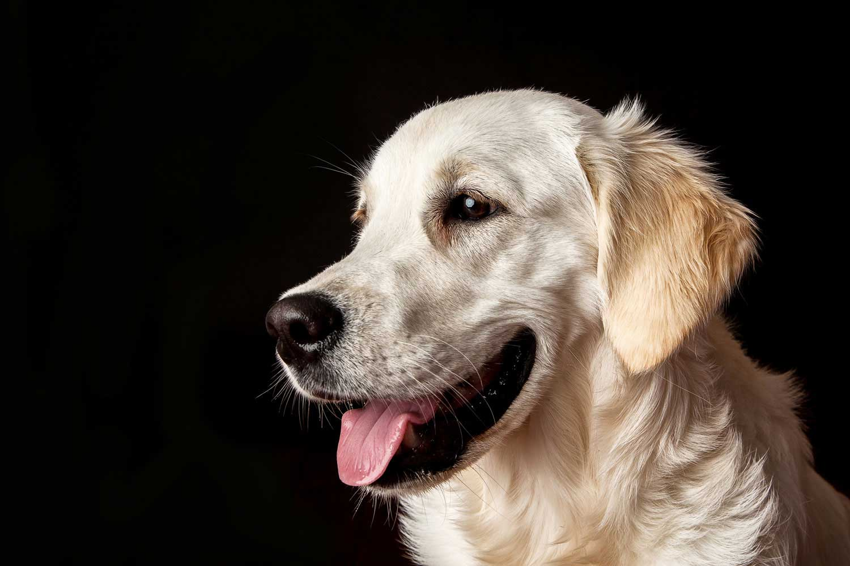 Dog Portrait Studio Photography 0046