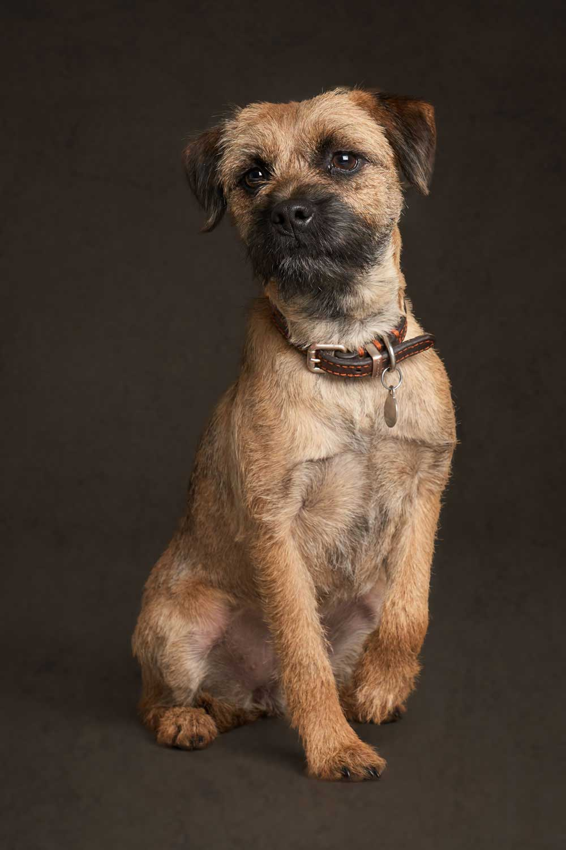Dog Portrait Studio Photography 0051
