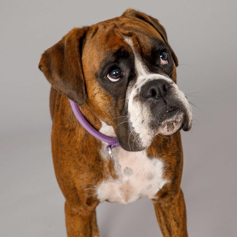 Dog Portrait Studio Photography 0052