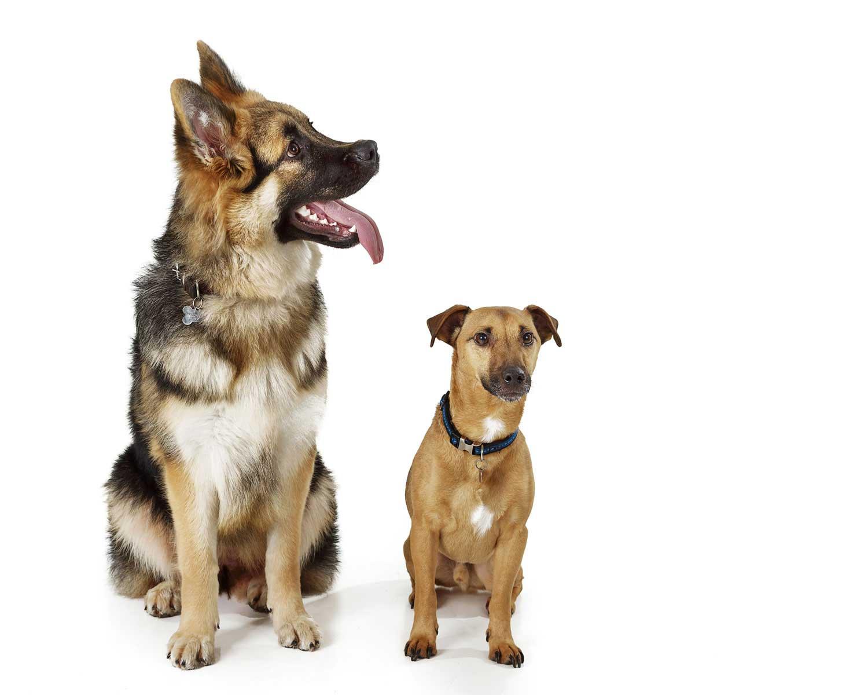 Dog Portrait Studio Photography 0053