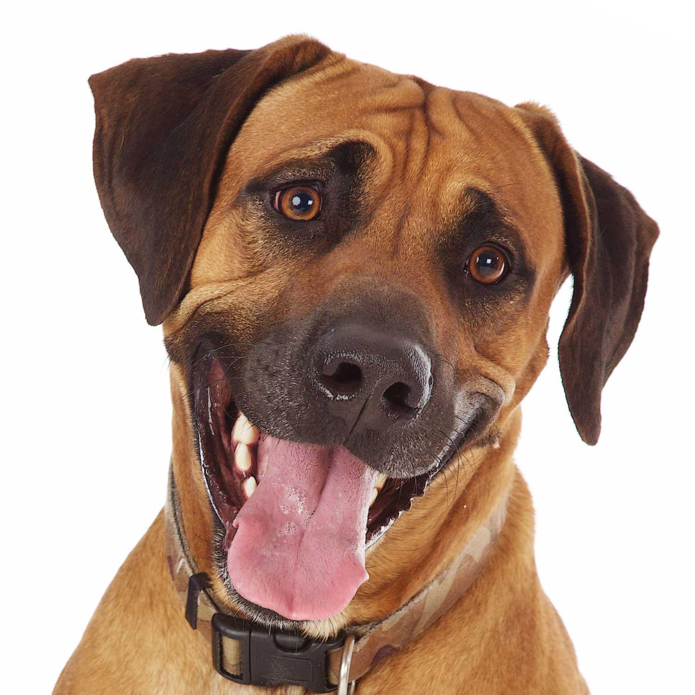 Dog Portrait Studio Photography 0054