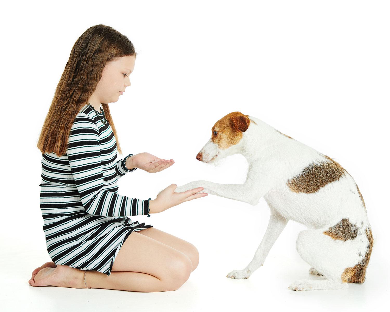 Adam Hillier Dog Portrait Photography